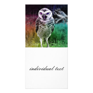 fascinating Owl, rainbow Picture Card