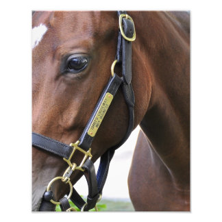 Fasig Tipton Yearling Auctions Photo Print