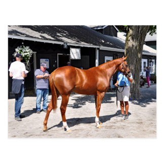 Fasig Tipton Yearling Sales Postcard