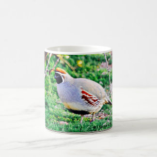 Fat Arizona Quail Coffee Cup/Mug Coffee Mug