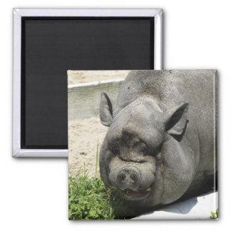 Fat Piggy | Farmland Magnet