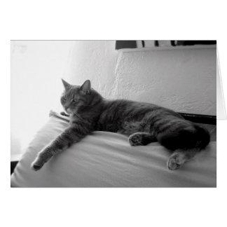 Fat Tabby Cat Card
