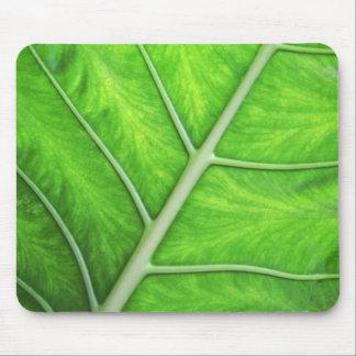 fatfatin Green Leaf Photo Mousepad