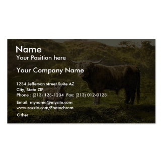 Father and son (highland cattle), England classic Business Cards