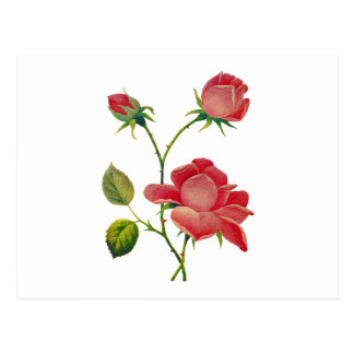 Faux Embroidered Deep Pink Roses Postcard