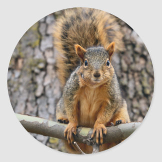 Faux fox squirrel classic round sticker