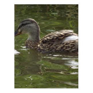 Fav little duckie post cards