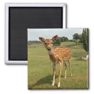 Fawn Baby Deer Refrigerator Magnet