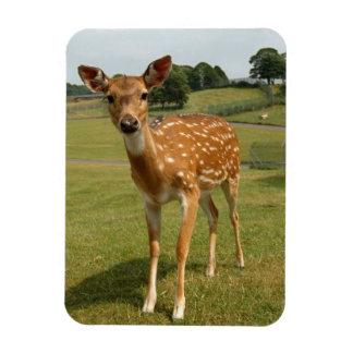 Fawn Baby Deer Vinyl Magnets