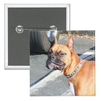 Fawn Boxer Dog Button