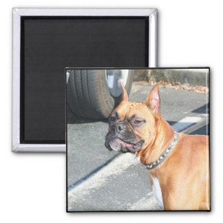 Fawn Boxer Dog Magnet