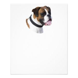 Fawn Boxer dog photo portrait Custom Flyer