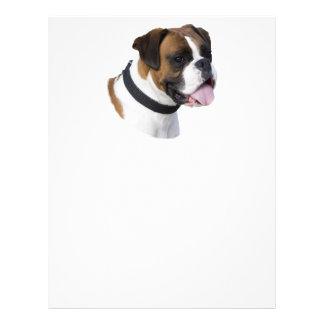 Fawn Boxer dog photo portrait Flyers