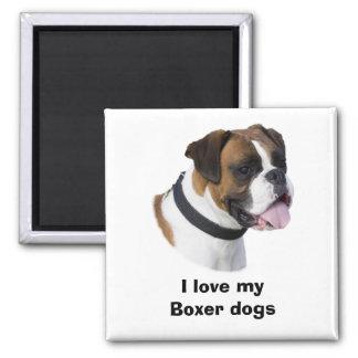 Fawn Boxer dog photo portrait Magnets
