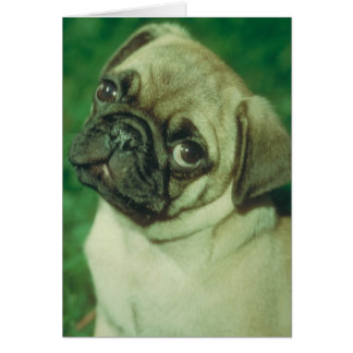 Fawn Chinese Pug Card