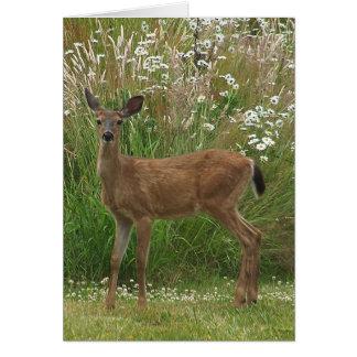 Fawn Deer Card