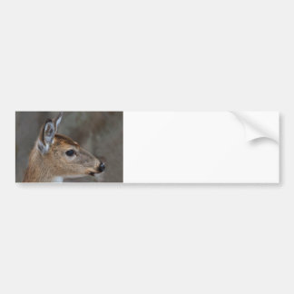 Fawn Face Bumper Sticker