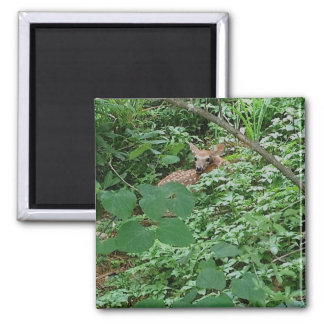 FAWN in Green Heart Leaves --- Magnet