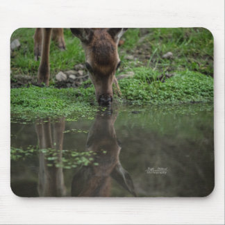 Fawn Reflection in Water Mouse Pad