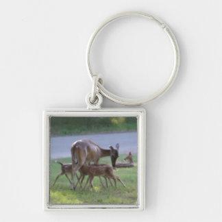 Fawn Triplets Nursing Silver-Colored Square Key Ring