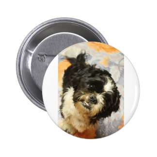 FB_IMG_1481505521015 Shitzu dog 6 Cm Round Badge
