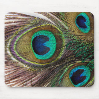 Feather of the Indian peafowl Mouse Pad