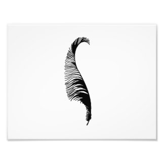 Feather Silhouette Art Photo