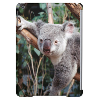 Featherdale Wildlife Park, Koala Bears