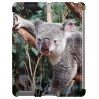 Featherdale Wildlife Park, Koala Bears