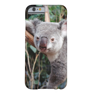 Featherdale Wildlife Park, Koala Bears Barely There iPhone 6 Case