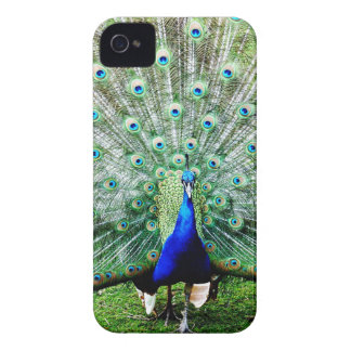 Feathers iPhone 4 Cases