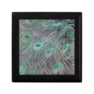 feathers of a peacock. gift box