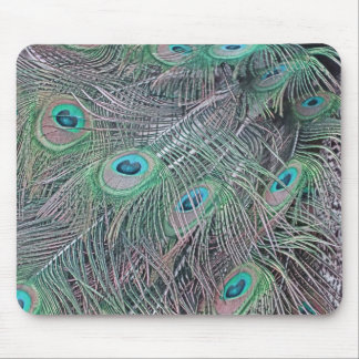 feathers of a peacock. mouse pad