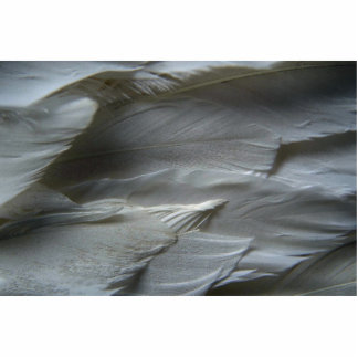 Feathers Photo Sculptures