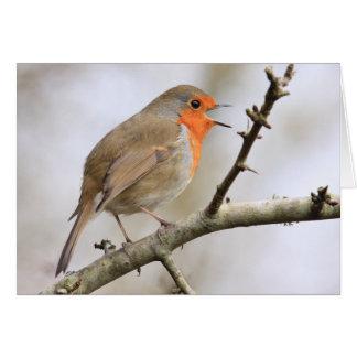 February Robin Greeting Card