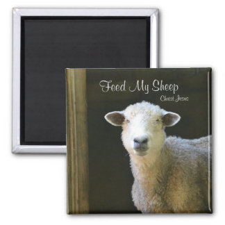 Feed My Sheep Square Magnet