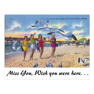 Feeding Gulls, Clearwater Beach, Florida Postcard
