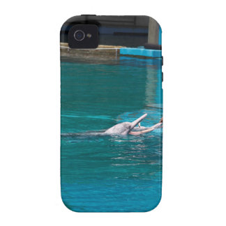 Feeding the dolphins as part of Dolphin show Case-Mate iPhone 4 Case