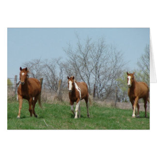 Feeding Time, Come and Get It, Three Horses Greeting Card
