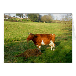 Feeding time for Guernsey cow Greeting Card
