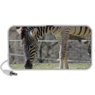 Feeding Zebras Travel Speakers