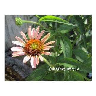 Feel Better Pink Daisy Postcard