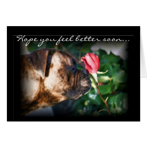 Feel Better Soon Boxer and Red Rose Greeting card