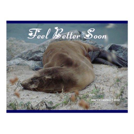 Feel Better Soon (Sea Lion) - Postcard