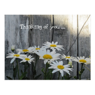 Feeling better with daisies. postcard