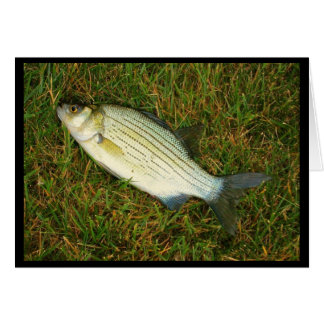 Feeling Like A Fish Out Of Water? Get Well Card