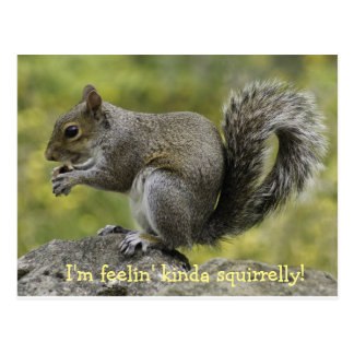 Feeling Squirrelly Postcard