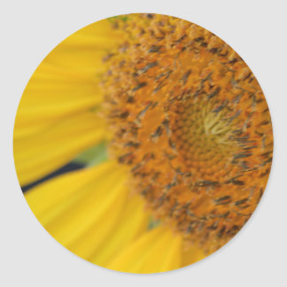 Feeling Sunny sticker