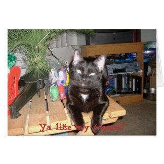Feline 6-Pack Greeting Card