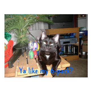 Feline 6-pack postcard